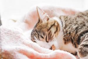 眠るねこ ピンク